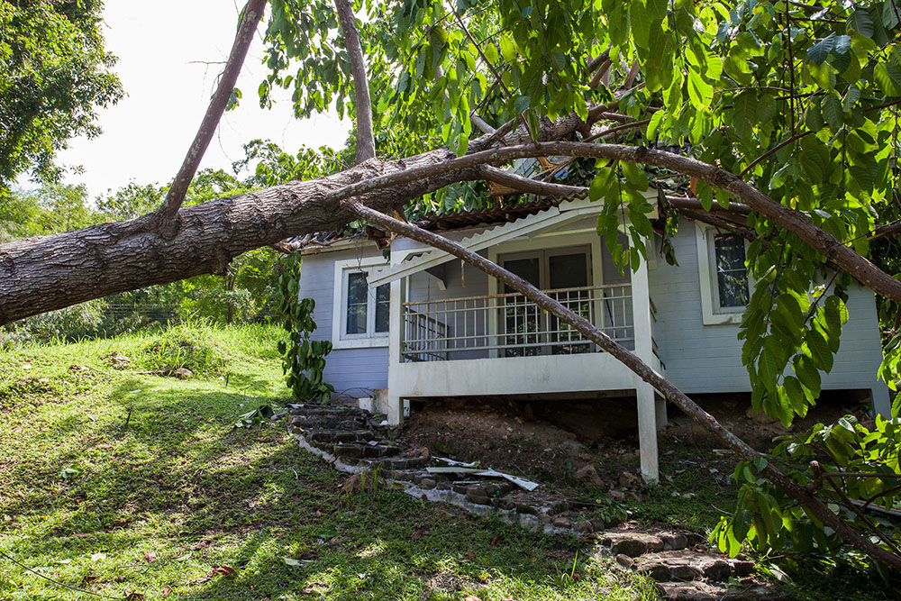 tree fell on house